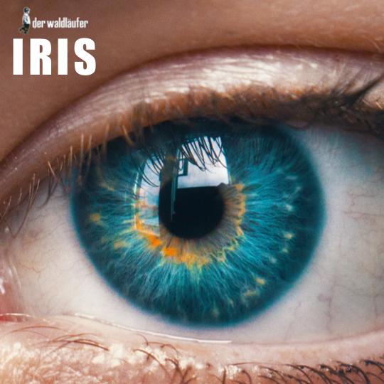 DER WALDLÄUFER-Iris